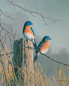 """Bluebird Pair""  by Jim Hautman"