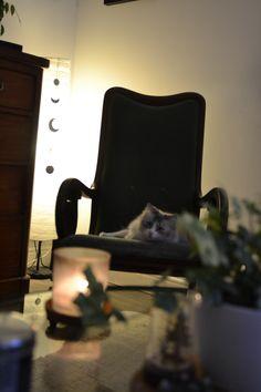 Home decore lightning cat rocking