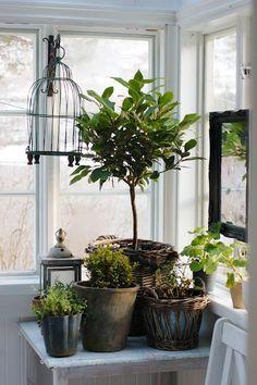 Potted plants, lantern and birdcage via Kristin-kleiva.