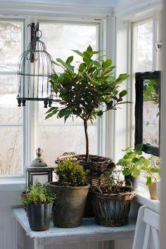 Potted plants, lantern and birdcage via Kristin-kleiva.