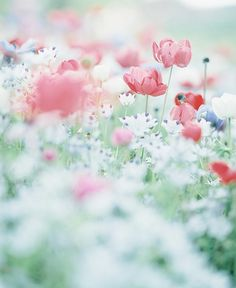 floralls: by une**