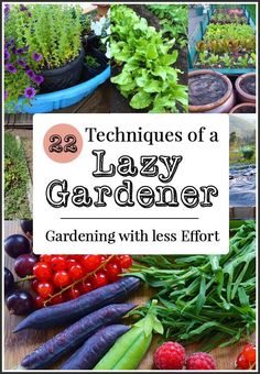 How to be a Lazy Gardener: 22 effort saving gardening ideas including tips on how to reduce the need for watering, weeding, and digging.