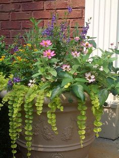 Container Garden: Creeping Jenny, Pink Zinnas, Angelonia, Lantana, and Lavender