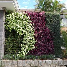 Mais do que apenas embelezar, jardins verticais são eco-eficientes;