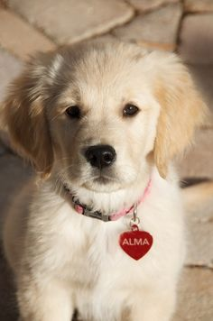 Alma as a baby - it was total chance that I found a picture of a puppy with the same name I used in the story.  :-)