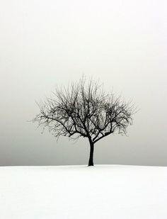lone apple tree in winter