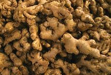 How to grow ginger in a patio container. Such a cool article. Ill never have to buy ginger at a store again.