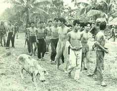 Suspected people of the Viet Cong are taken by the village. 1967.