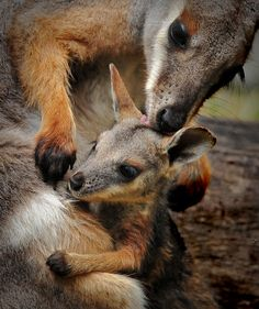 """""""Motherly love by Joe McBroom Photographer"""" Beautiful photograph. I love the image, the composition and the colours. S."""