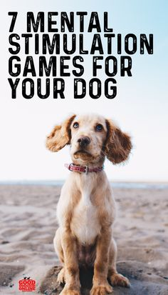 Check out these mental stimulation games for your dog to use brain training for dogs to keep your pup healthy and sharp. Dog Games, Puppy Care, Dog Care Tips, Pet Life, Dog Training, Brain Training, Dog Mom, Dogs And Puppies, Maltese Dogs