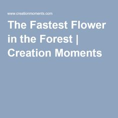 The Fastest Flower in the Forest   Creation Moments
