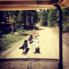 At Snow Caps Sled Dogs, near Breckenridge. They keep their Huskys fit during the summer by pulling golf carts.