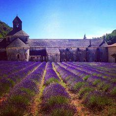 #ラベンダー畑 #ラベンダー #セナンク修道院 #プロヴァンス #ここに来るのが夢だった #念願のやつ #キレイすぎた #いい香り #すでにまた行きたい #notredame #senanque #lavender #provence  #flower #flowers #holiday #travel #france #iphone #iphonephotography