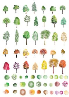 a huge set of colour trees in photoshop finished in different artistic style showing both landscape architecture drawingwatercolor - Architecture Drawing Of Trees