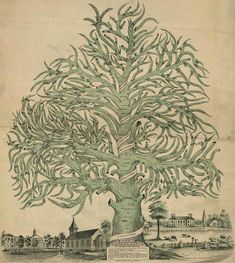 """""""The Library of Congress has one of the world's premier collections of U.S. and foreign genealogical and local historical publications. The Library's genealogy collection began as early as 1815 with the purchase of Thomas Jefferson's library."""""""