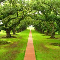 Bom dia!  Todos os caminhos do homem são limpos aos seus olhos; mas o Senhor pesa os espíritos. Provérbios 16:2