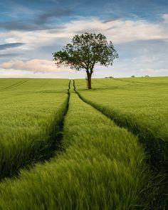Wheat Fields, Sky Landscape, Free In, Fresh Water, Country Roads, Earth, Blue Skies, Plants, Landscapes