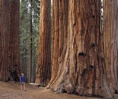 Sequoia National Forest, family camping trip, 199?