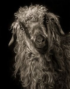 GOERGEOUS GOATS IN PICTURES_Bella