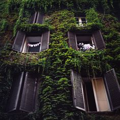 green house, Rome