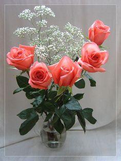 Beautiful Rose Flowers, Flowers Gif, Beautiful Gif, Beautiful Flowers, Glider Images, Love Heart Images, Happy Birthday Messages, Bonsai Garden, Flower Frame