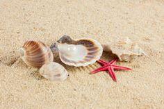 https://thumbs.dreamstime.com/t/muscheln-und-starfish-auf-sandstrandpostkarte-54224072.jpg