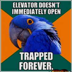 Paranoid Parrot will die in that elevator...