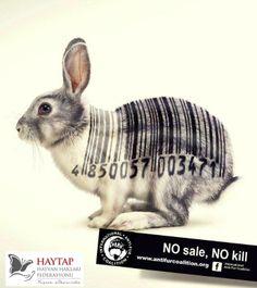 www.haytap.org Why Vegan, Animal Rights, Going Vegan, Animals Beautiful, Animals And Pets, Cruelty Free, Rabbit, Fur, Veganism