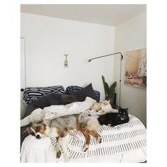Roommates audience and bed hogs. // #nimbicat #looeycat @joni_shepherd // #bungalowinthetrees