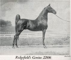 CH Ridgefields' Genius was sired by CH King's Genius.
