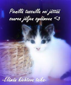 Erilainen Mummi: Raskaita muistoja Kittens Cutest, Lol, Thoughts, Photo And Video, Friends, Quotes, Pictures, Gatos, Amigos