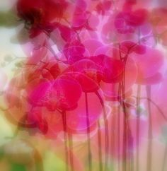 pinks add vibrancy!
