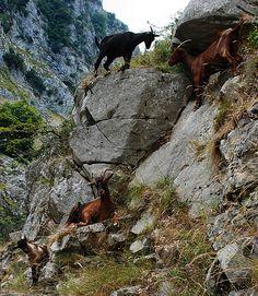 Ruta del Cares, Cantabria, Spain