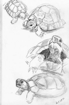 -Studying tortoises… by Feleri.deviantart… on Studying tortoises… by Feleri.deviantart… on See it Pencil Art Drawings, Art Drawings Sketches, Cute Drawings, Tattoo Sketches, Tattoo Drawings, Easy Animal Drawings, Tattoos, Arte Sketchbook, Sketchbook Ideas