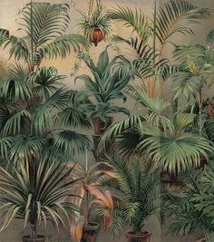 Here you will find floral prints and posters. Stylish posters with botanical prints of colorful plants. Buy botanical posters online from Desenio. Tropical Art, Tropical Plants, Leafy Plants, Vintage Prints, Vintage Posters, Gold Poster, Tableaux D'inspiration, Kentia Palm, Theme Nature