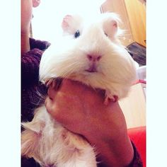 Small pets can have the biggest hearts! Choose the best one for you. (Photo credit: giulia_buggy)