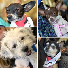 Los Angeles doggies that need homes! Via The Rescue Train and @weheartthis