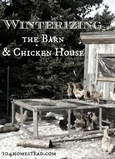 Winterizing the Barn & Chicken House - Winter is approaching. I'm not ready yet. Here are tips for preparing your barn and chicken house for the long, cold winter. Plus, special considerations for goats, chickens, ducks and rabbits. The 104 Home Keeping Chickens, Raising Chickens, Backyard Farming, Chickens Backyard, Backyard Coop, Homestead Farm, Homestead Living, Future Farms, Chicken Lady