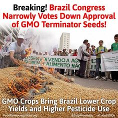 Breaking! Brazil Congress Narrowly Votes Down Approval Of GMO Terminator  Seeds! Read More Here: http://sustainablepulse.com/2013/12/22/gm-crops-bring-brazil-lower-yields-higher-chemical-use-new-report/#.UrfetpQ4Vr1