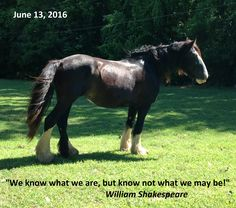 My beloved Broodmare Iris! Be Inspired! Shire Horse, Farms, Horses, Inspired, Animals, Homesteads, Animales, Animaux, Animal