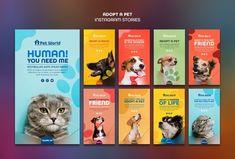 Instagram Design, Instagram Story, Instagram Posts, Pet Websites, Email Template Design, Flyer Template, Pet Branding, Pet Hotel, Minimal Web Design