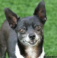 Nitro was adopted on 6/15/14!