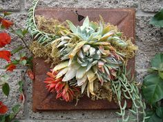 Found this rusty, old treasure tossed along the side of the road on my morning walk. I planted it with dudleya, crassula campfire and senecio fish hooks. Photo/designer Laura Eubanks Design For Serenity