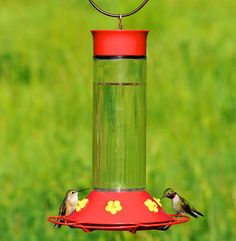 Our best easy to clean Perky-Pet® hummingbird feeder comes with a wide mouth opening. The 30 oz large capacity feeder is great for the heart of hummingbird season, so you don't need to constantly refill! Glass Hummingbird Feeders, Humming Bird Feeders, Homemade Hummingbird Food, Any Birds, Wild Birds, Eating Plans, Drinking Water, 3 D, Food And Drink