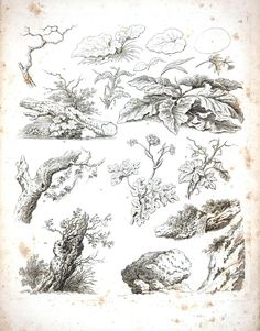 Botanical - Black and White - Tree sketches 9