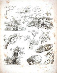 Botanical - Black and White - Tree sketches 9