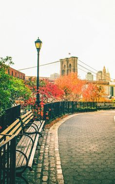 Autumn colors by the Brooklyn Bridge; by Vivienne Gucwa