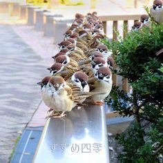 スズメたちによる「素晴らしい整列」Twitterで話題に - ライブドアニュース