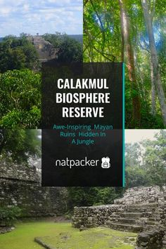 The biosphere reserve of Calakmul is a jungle in Mexico, with some ancient Mayan ruins hidden deep within. In this post you can find out how to get there, the history of Calakmul and what to expect. You can climb pyramids and see Mexican wildlife in this UNESCO World Heritage Site.  visit mexico |  mexico | calakmul ruins | calakmul campeche | mayan ruins | campeche state | mexico travel | wanderlust | unesco site | mexican ruins | ancient sites | ancient history | natural area | jungle |