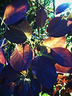 finejuppjupp's photo: whispering sunlight
